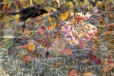 Autumns Arrival (1).jpg