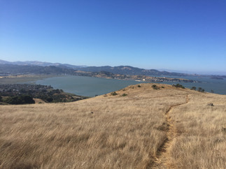 Views from Marin