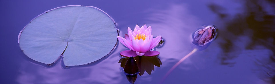 lotus-1205631_1280 (1).jpg