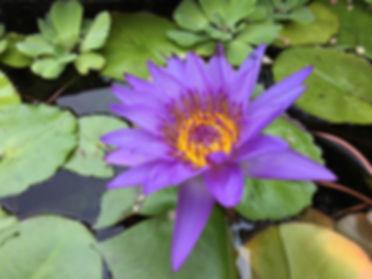 purple-3609479_1280.jpg