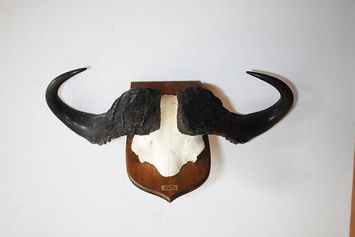 Cape Buffalo Skull Cap