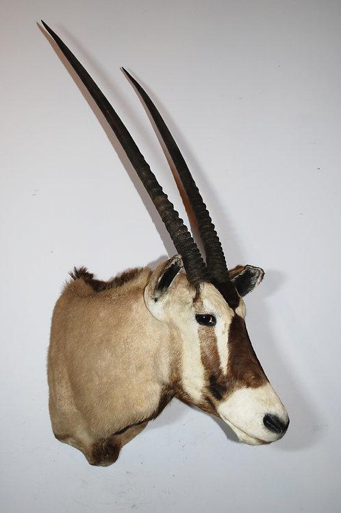Gemsbok (Oryx) Mount