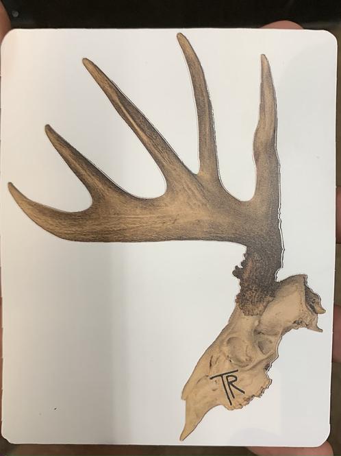 Oklahoma Moose