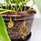 Thumbnail: Tiger's Eye Lotus Hook Earrings