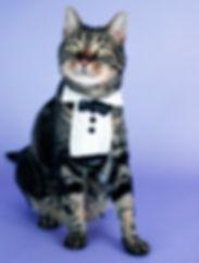 tuxedo-both-375w-1.jpg