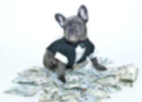 dog with hundreds.jpg