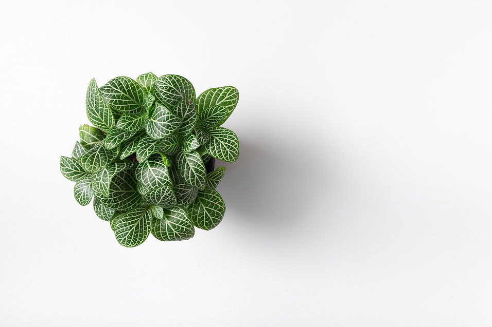 Top view plant in pot isolated on white