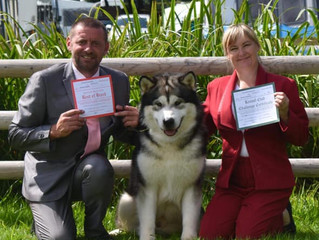 Tobougg wins his 2nd CC at Welsh Kennel Club show
