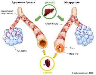 Связь астмы с нарушениями в работе различных органов и систем тела