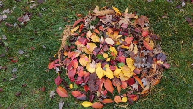 Leaf Nest.jpeg