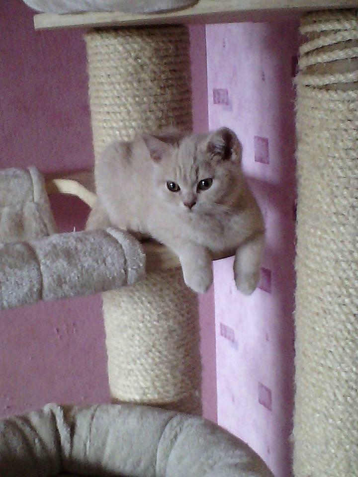 Marley sur son arbre à chat