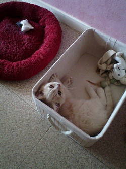Marley dans sa boîte