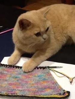 Le tricot de Milorde