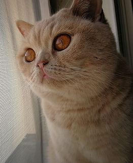 Nausicaa de la tendre peluche. Des yeux