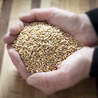 GrainHand.jpg