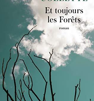 Jour 11 - Et toujours les forêts
