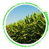 green soil.jpg