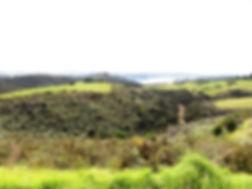 Kiwi Country.JPG