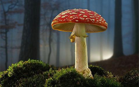 Mushroom-moss-forest-plants_1920x1200.jp