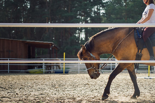 the-horse-4268618_1920.jpg