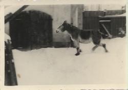 um 1920-1960 (28)