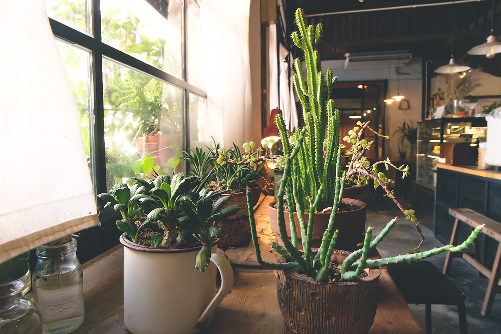 Potted houseplants