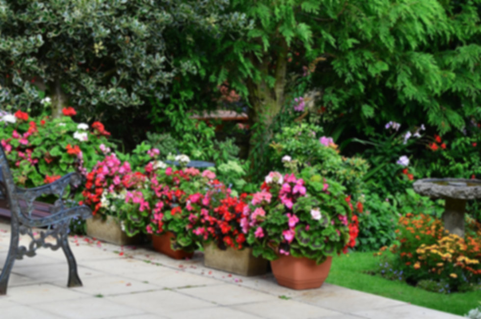 Subscribe to English Gardens & Antiques