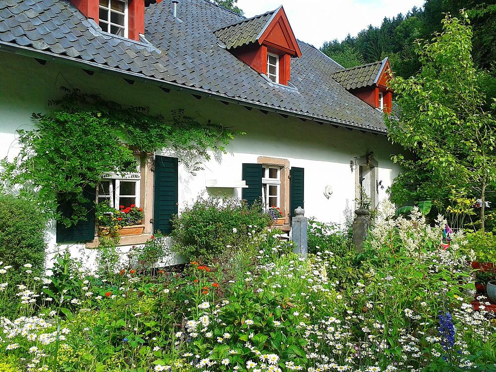 gardening tips for beginners, gardening advice, gardening tips