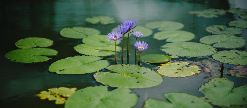 The Benefits of Installing a Water Feature To The Garden