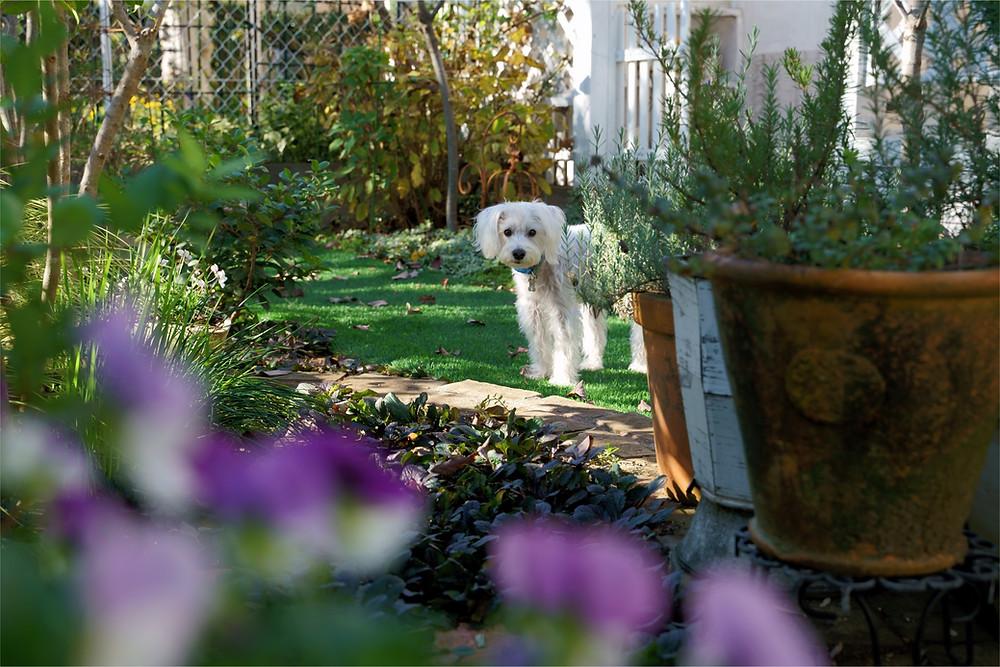 Gardening advise, gardening tips