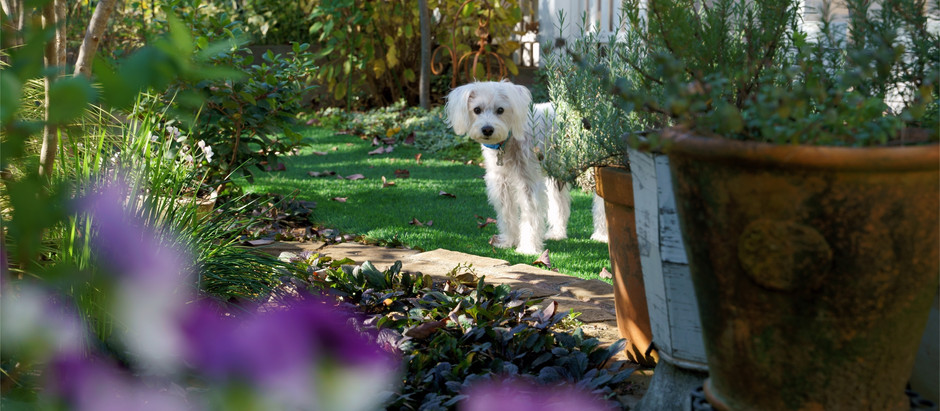 3 Tips for Keeping Your Pet Out of Your Garden