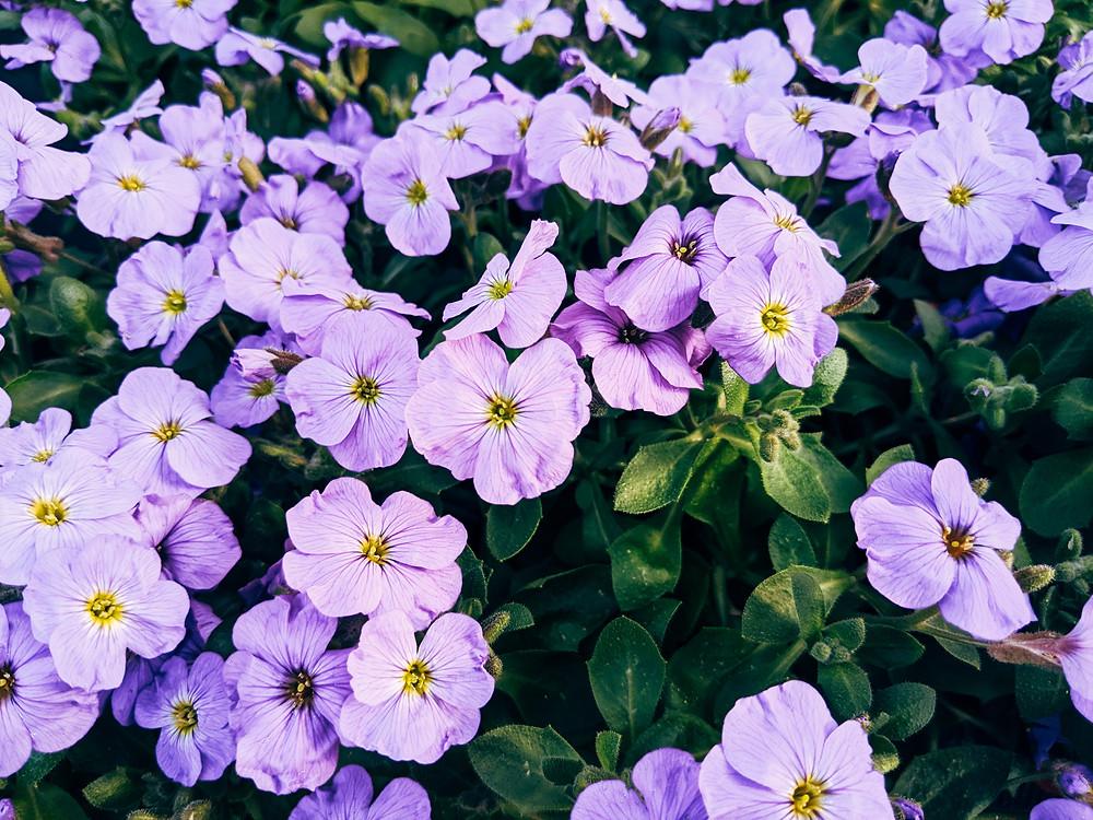 gardening, lifestyle, gerdens, egamag, gardening tips, gardening advise
