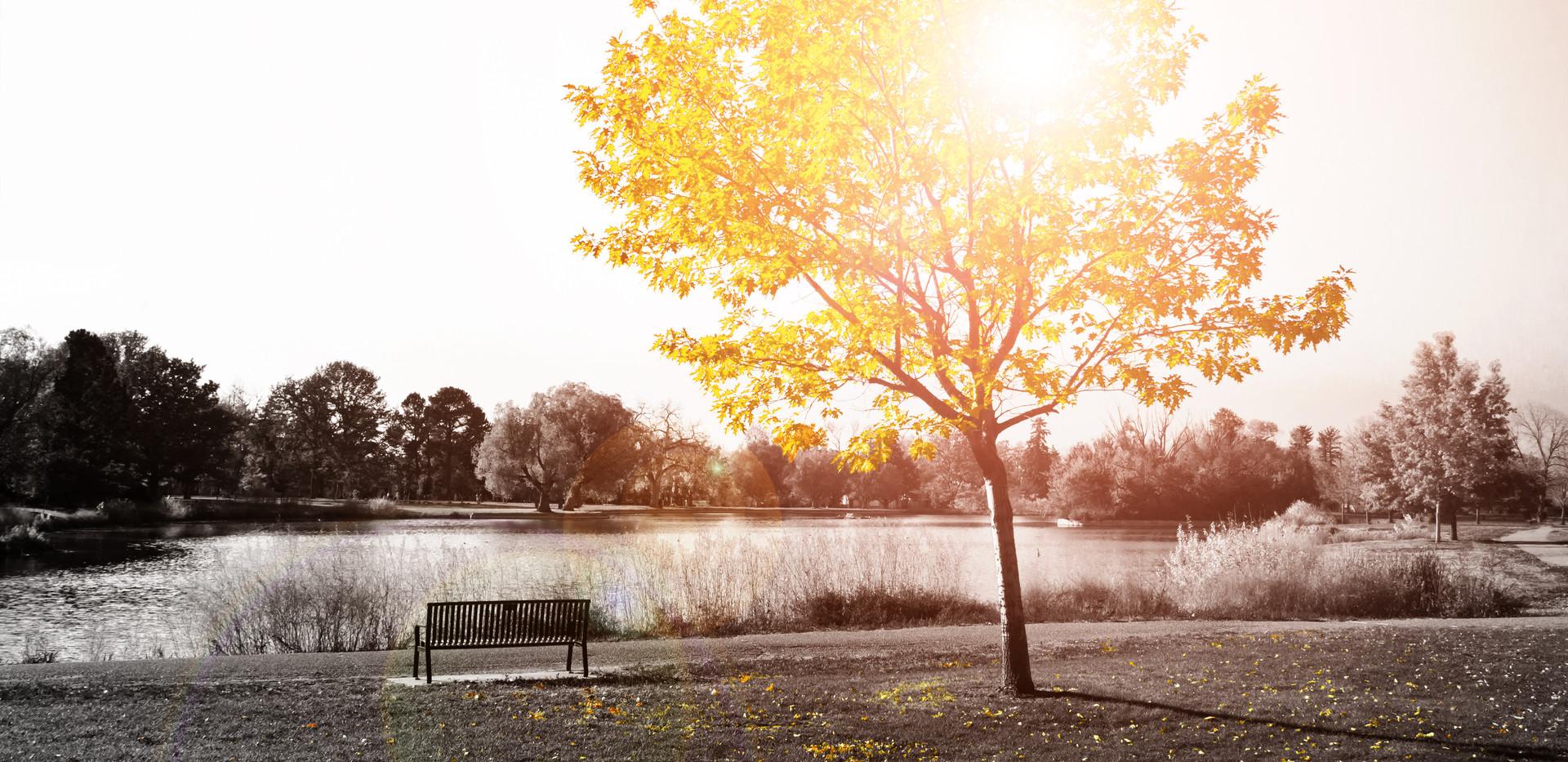 Sunlight shine on empty park bench under