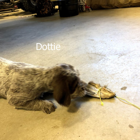 6 Weeks Old - Dottie