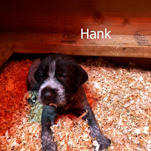 Hank - 3 Weeks Old