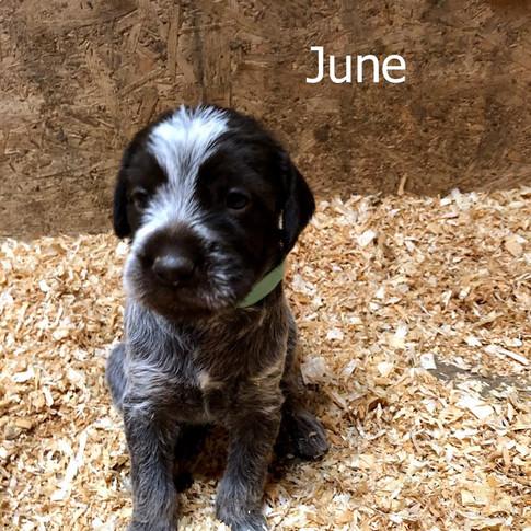 4 Weeks Old - June