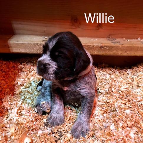 Willie - 3 Weeks Old