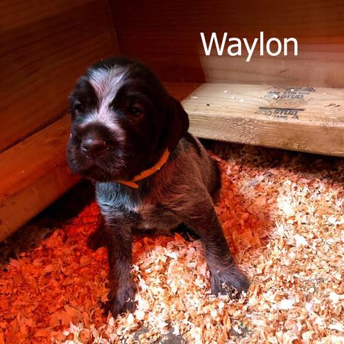 Waylon - 3 Weeks Old