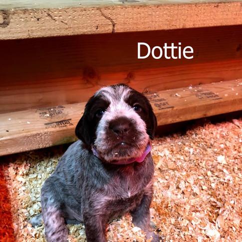 Dottie - 3 Weeks Old