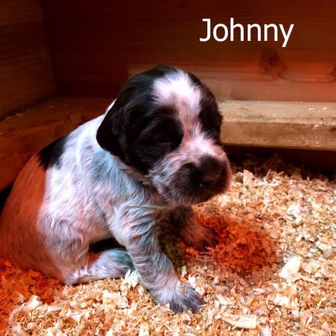 Johnny - 3 Weeks Old