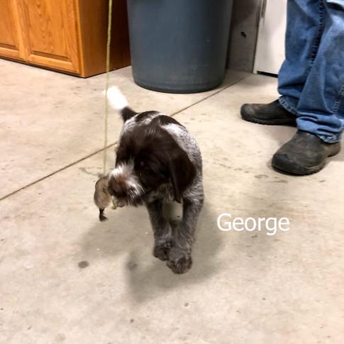 6 Weeks Old - George