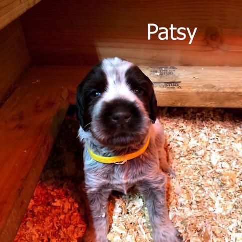 Patsy - 3 Weeks Old