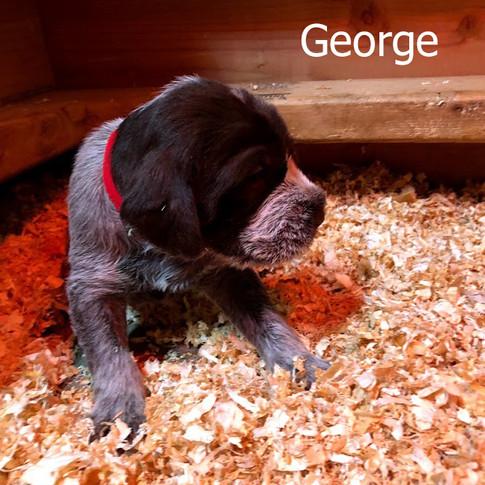 George - 3 Weeks Old