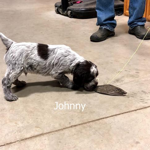 6 Weeks Old - Johnny