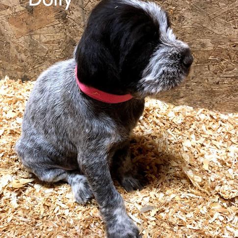 4 Weeks Old - Dolly