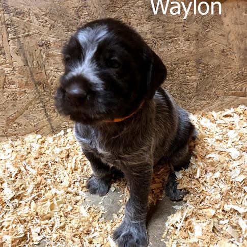 4 Weeks Old - Waylon
