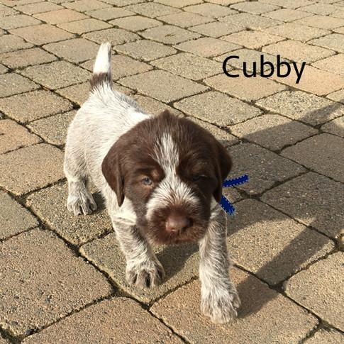 4weeks_cubby.jpg
