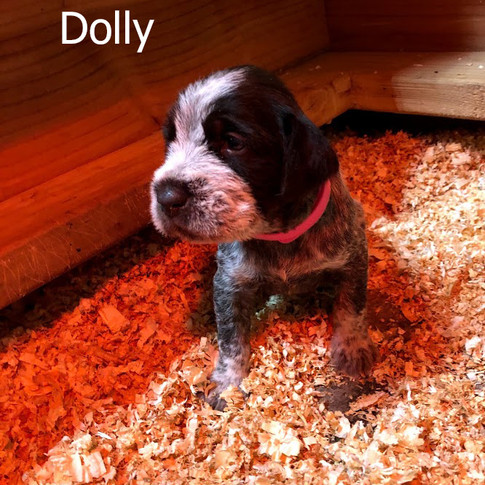 Dolly - 3 Weeks Old
