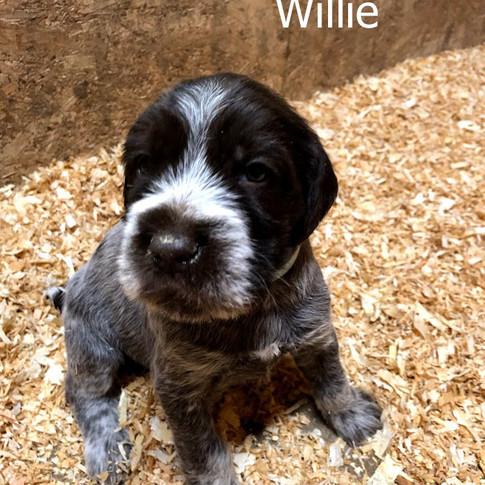 4 Weeks Old - Willie