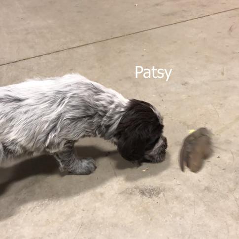 6 Weeks Old - Patsy